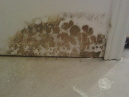 mold-growth-on-drywall-in-the-basement
